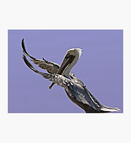 Pelican Tai Chi Photographic Print