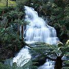 Waterfall...Otway Ranges, Victoria by graeme edwards