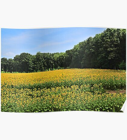 Sunflower Dreamscape Poster