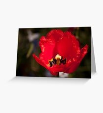 Portrait of a Red Flower Greeting Card