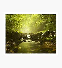 fairyland Photographic Print