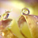 Eyes On Iris by Tara Lemana