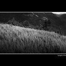 Sunlight on Ferns  by Wayne King