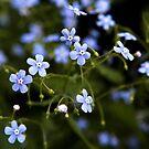Blue flowers by Yana Art
