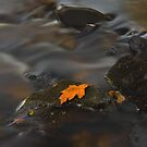 Autumn leaf by Rory Trappe