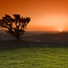 Windswept tree by Rory Trappe