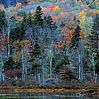 Autumn Color - Basin Pond by T.J. Martin