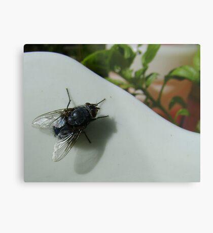 housefly (Musca domestica), on jug in garden Metal Print