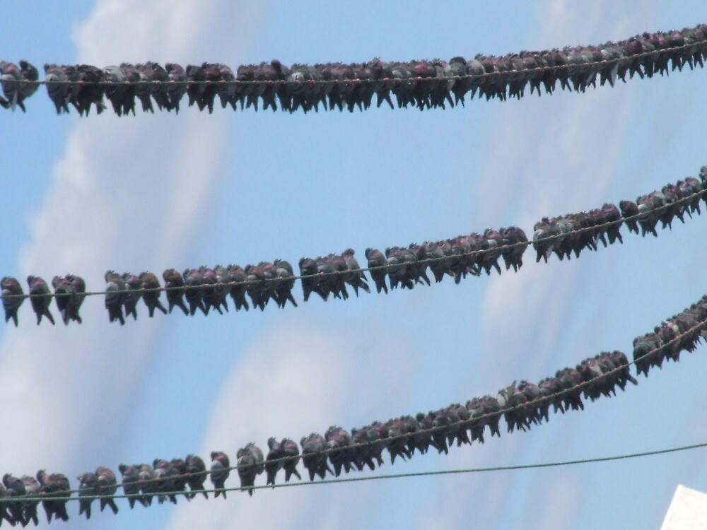 Birds on wire by davidleahy