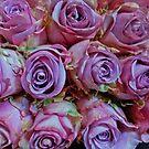 VIOLET TRI-COLOR ROSES by Elaine Bawden