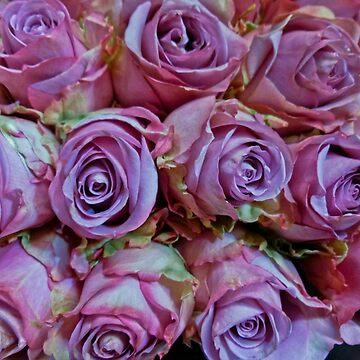 VIOLET TRI-COLOR ROSES by elainebawden