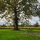 Tree and bench in Walnut Woods Park by Jeremy Lankford