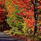Autumn Roadside  by Kathleen Daley