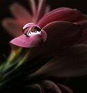 In the Pink by Ingrid Beddoes