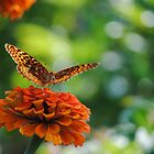 Orange Butterfly by Rachael Martin