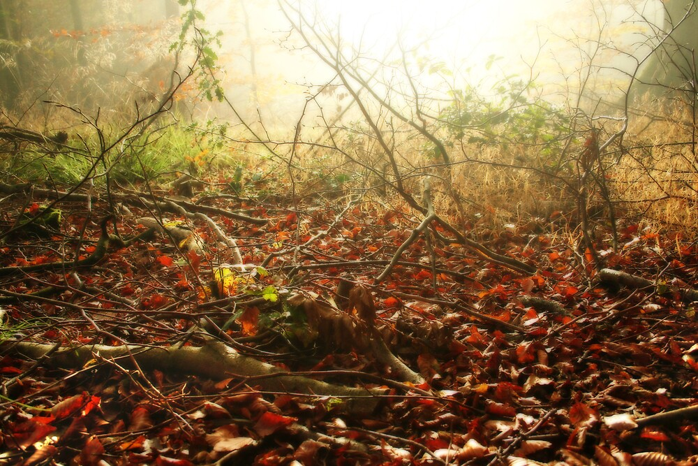 Morning on the Autumn forest floor by Graham Ettridge