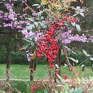 In the Berkley Garden in the spring. by Elspeth  McClanahan