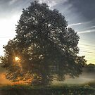 Sun Peaking through Tree by Artondra Hall