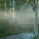 Dusty Trail,Sheepyard Flat, Victorian High Country by Joe Mortelliti