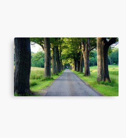 Tree Grove Canvas Print