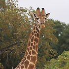 Giraffe von LitchiArt