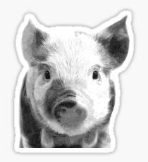 Black and White Pig Sticker