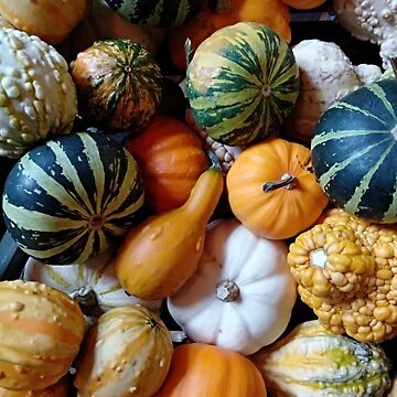 Diverse assortment of pumpkins. Autumn harvest. by designer437