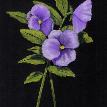 Purple Pansies on Black, Color Pencil Drawing, Flower Art by Joyce