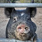 This little piggy by JEZ22