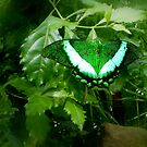 Green Butterfly - Perfect Camouflage by mcworldent