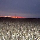 a promise after the drought murray mallee south australia by DENENE CHERISE MAXWELL