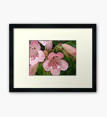 Pretty Pink Bellflowers..Macro Framed Print