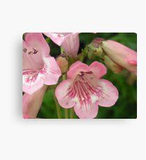 Pretty Pink Bellflowers..Macro Canvas Print
