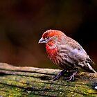 Sleeping Bird by WilWil-G