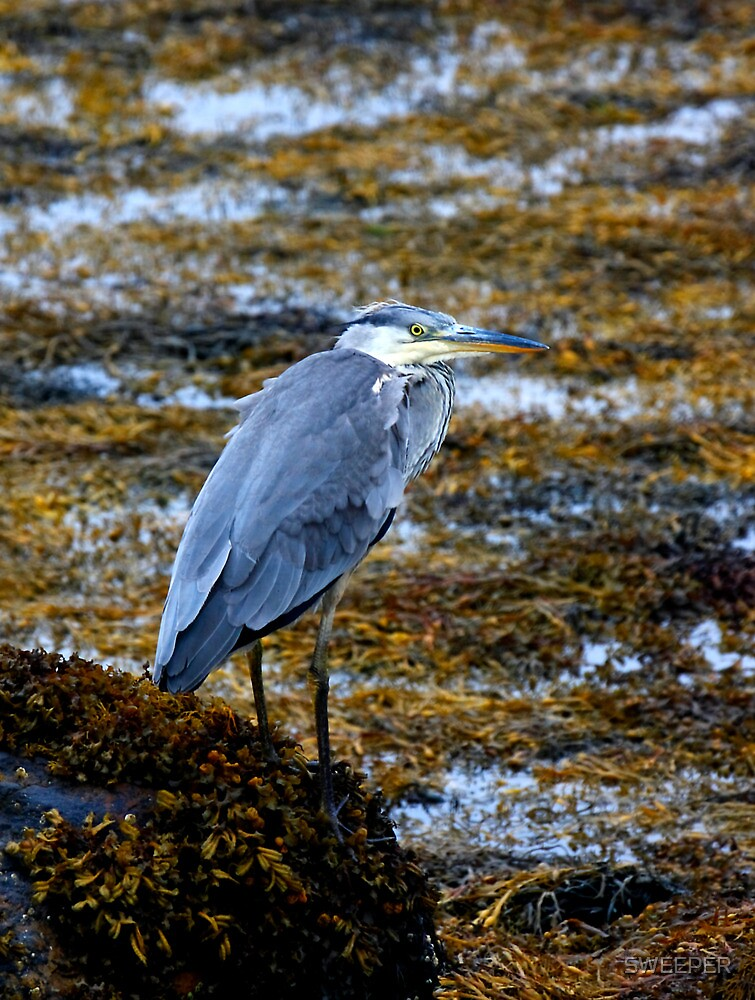 Heron with attitude by SWEEPER