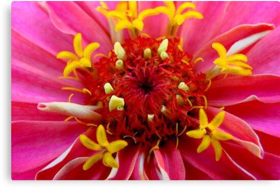Macro Flower by Tricia Stucenski