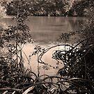 The mangrove swamp, Queensland by Alex Bonner