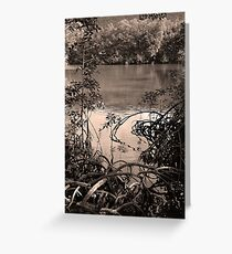 The mangrove swamp, Queensland Greeting Card