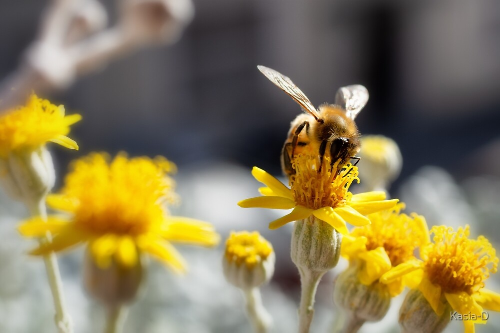 Busy Bee by Kasia-D