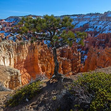 Bryce Canyon Close to the Edge by photosbyflood
