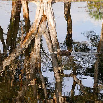 Reflected Duck by baji
