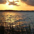 St Johns River by Bob Hardy