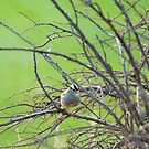 bird amongst bare winter branches by aspenrock