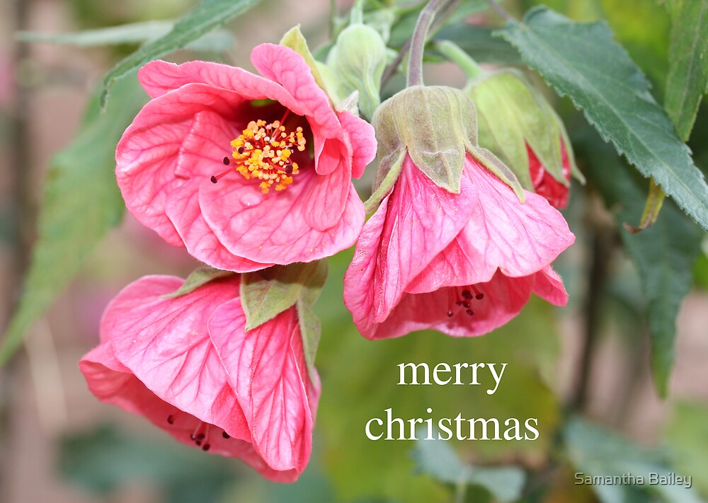 Christmas Hibiscus by Samantha Bailey