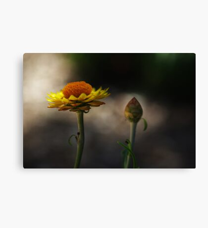 the morning paper daisies Canvas Print