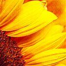 shine sunflower shine by lensbaby