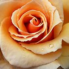 Whiskey Rose ~ Smoky and Sensuous by SummerJade