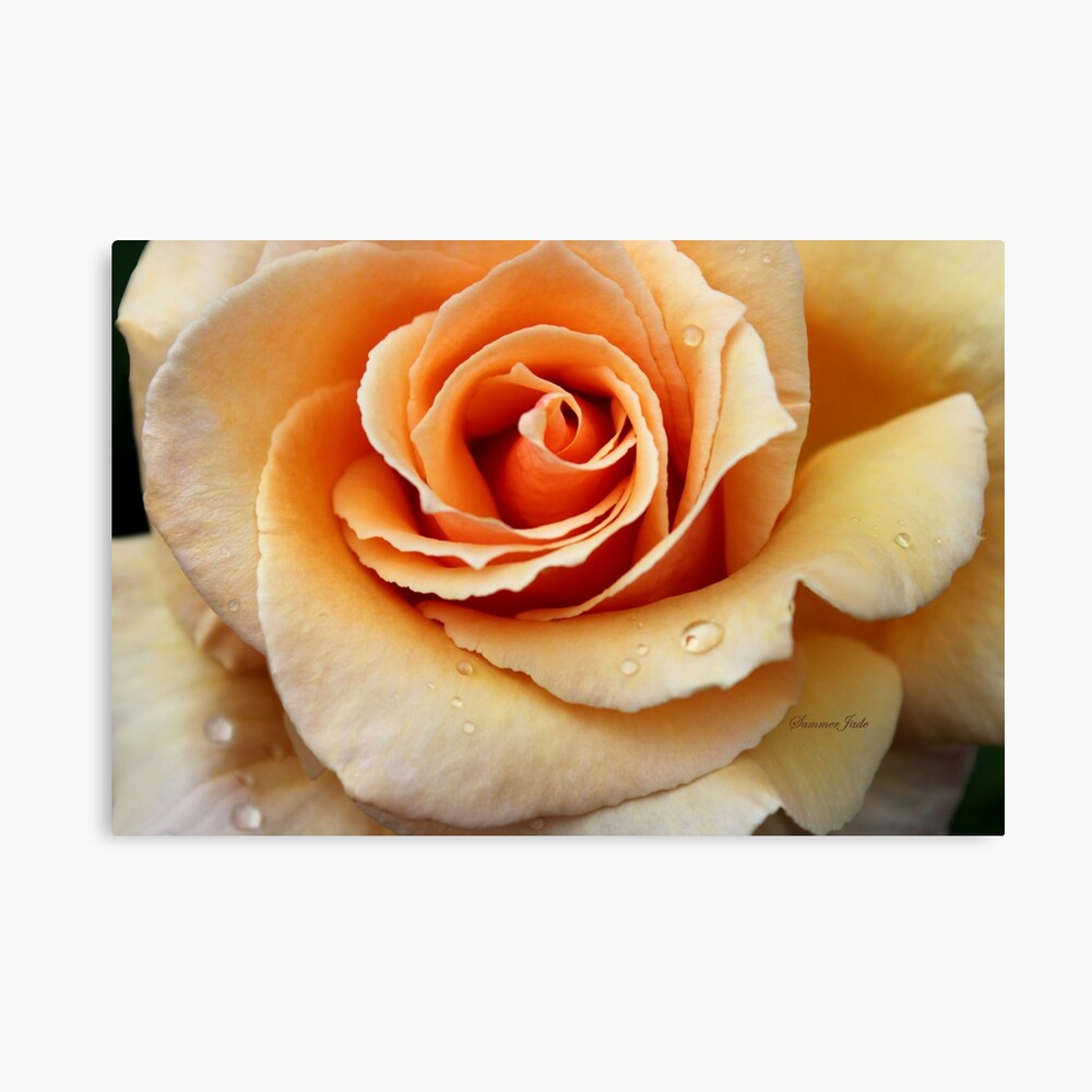 Whiskey Rose ~ Smoky and Sensuous Canvas Print