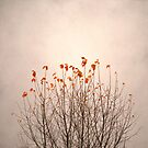Beech Leaves by Mary Ann Reilly