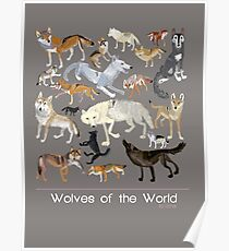 Wolves of the world (Poster) Póster